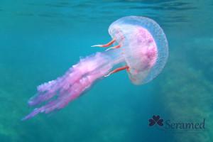 que hacer ante una picadura de medusa